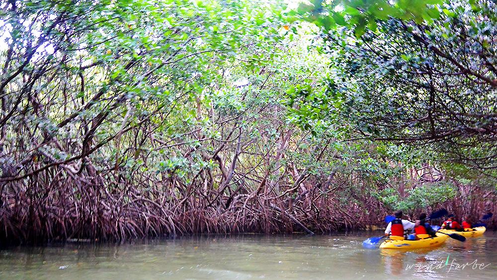 Mangroventunnel